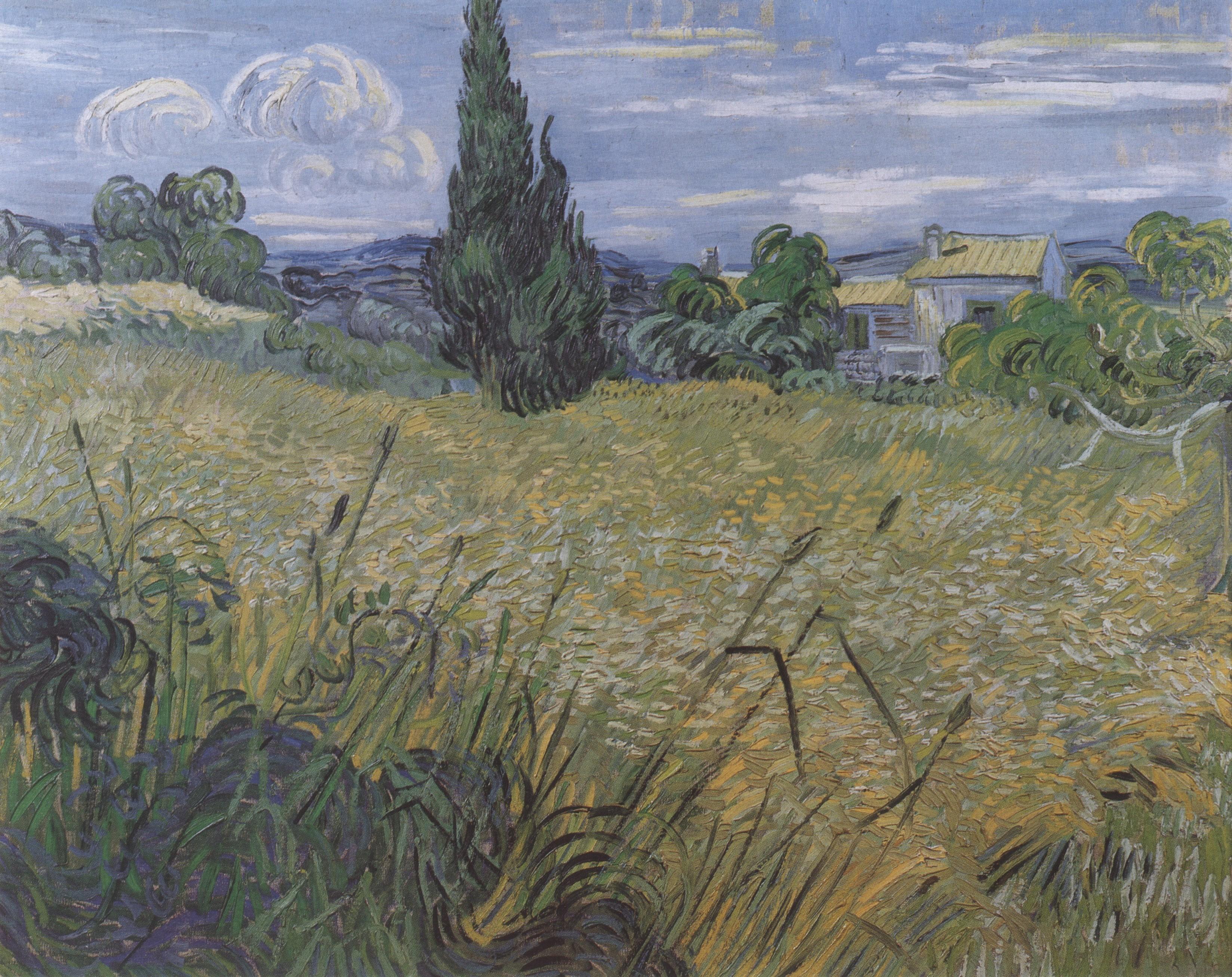 Wheatfield With Cypresses Wallpaper 610 Green Wheat Field ...