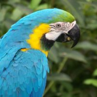 Birds - Blue Macaw Parrot