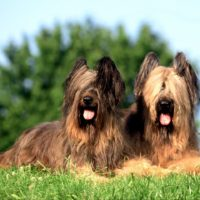 Amazing dogs images
