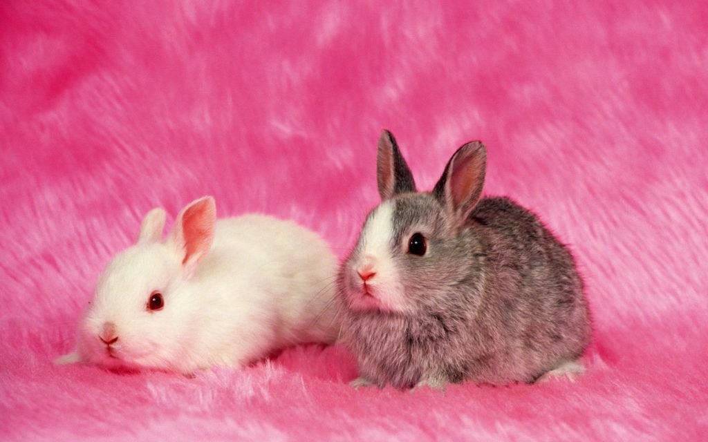 Rabbits Wallpaper